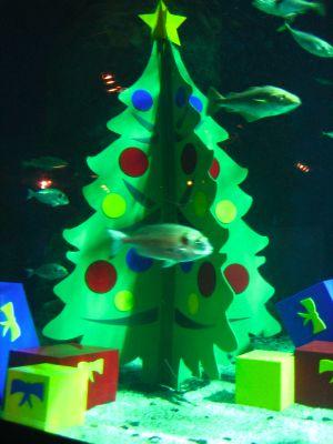 [Image: 051215_aquarium1.jpg]
