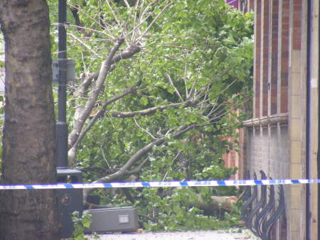 Woman killed as bus hits tree in Tower Bridge Road
