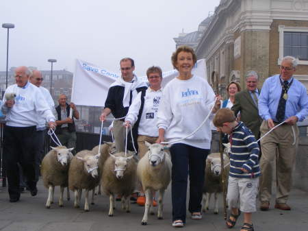 City freemen drive sheep across London Bridge