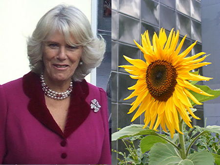Duchess of Cornwall to go guerrilla gardening at Elephant & Castle