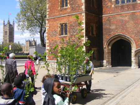 Elms do the Lambeth tree walk as saplings are delivered to palace