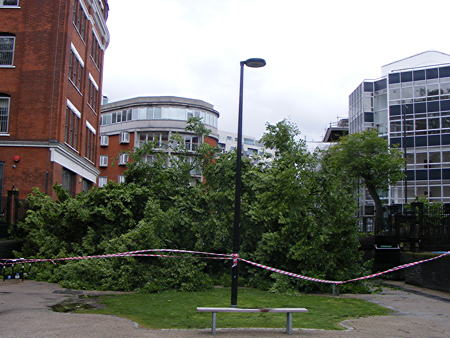 Miracle escape as huge tree falls on Tabard Street piazza
