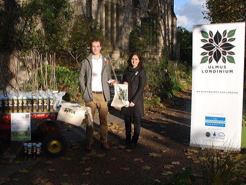 Londoners collect elm trees at Garden Museum