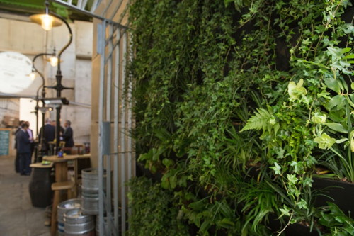 Green wall created next to Borough's Wheatsheaf pub