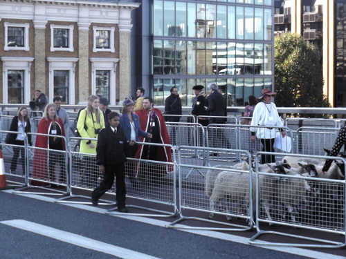City freemen hold London Bridge sheep drive