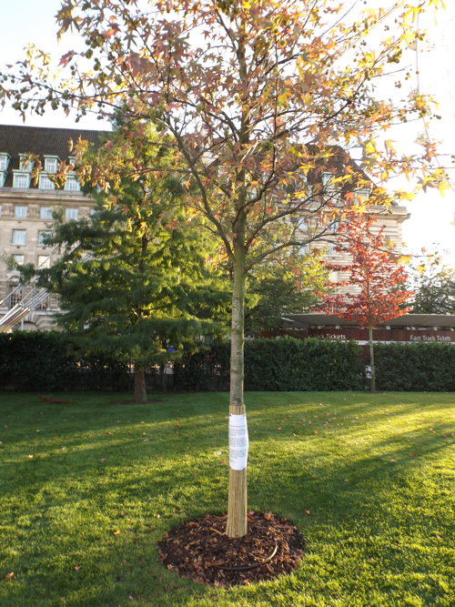 Jubilee Gardens: call for vigilance after trees 'damaged by dogs'