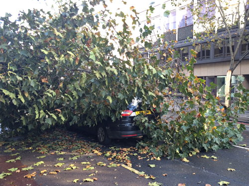 Lucky escape as falling tree hits minicab in Southwark Street