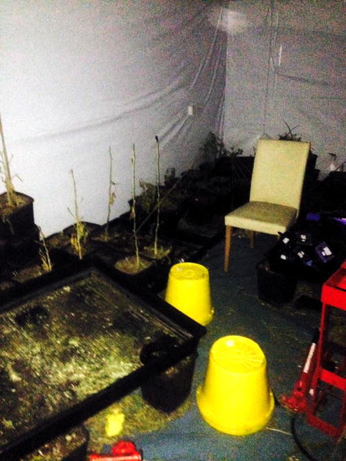 Police raid Bermondsey cannabis factory and seize 90 plants