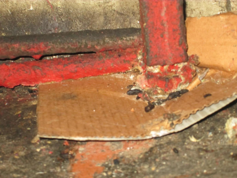 Owner of rat-infested Old Kent Road cafe taken to court