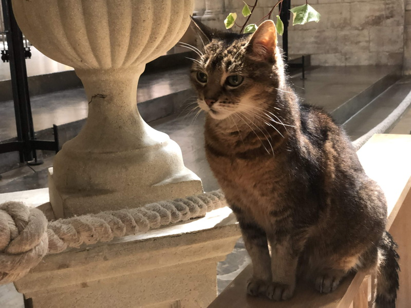 Thanksgiving service for Southwark Cathedral's much-loved cat