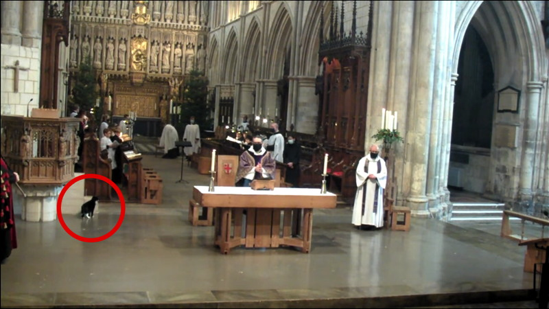 Hodge the cat at Southwark Cathedral