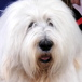 Dulux dog drops in to Lower Marsh on Independents' Day