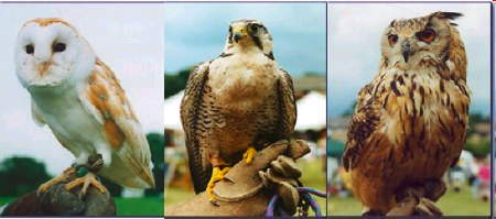 Falconry Day at Waterloo Millennium Green