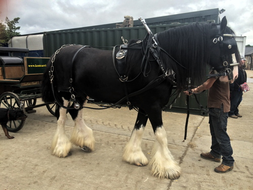 Shire horses in Shad Thames at Courage Yard