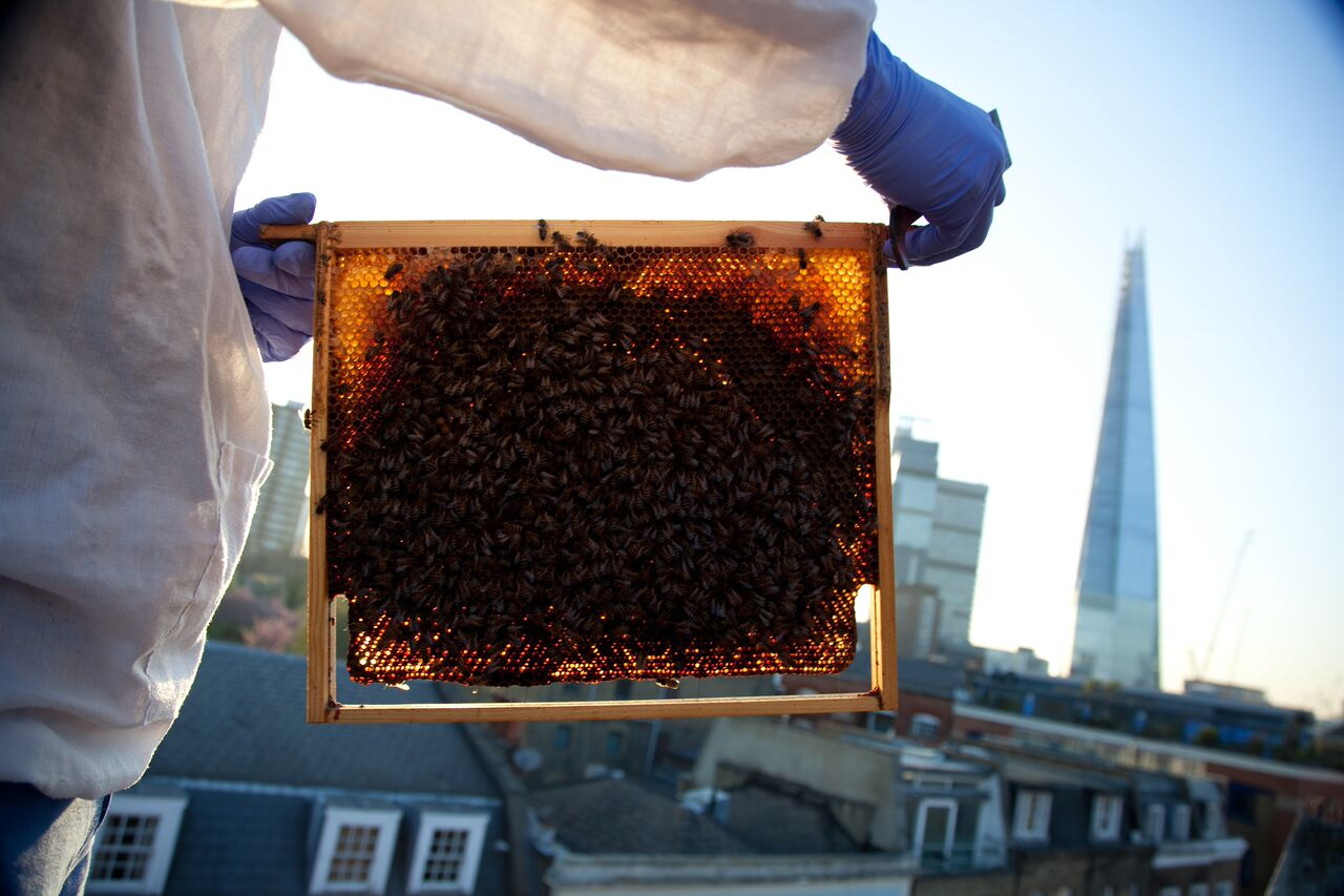 Urban bee and honey showcase at Borough Market
