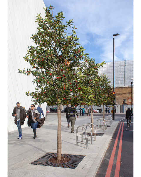 The urban forest and the tree officers who manage it at Southwark Underground Station